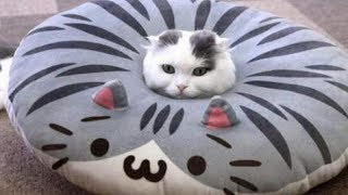 Very FUNNY CATS - Super HARD TRY NOT TO LAUGH challenge