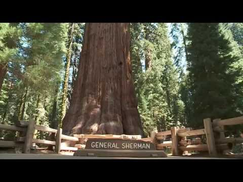Species Loss, Precipitation, and Fire in Sequoia-Kings Canyon National Park