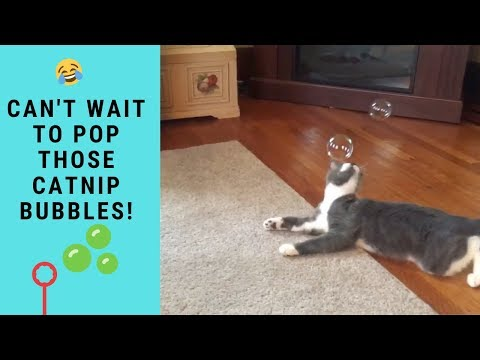 Funny Cats Popping Playing With Catnip Bubbles | Funny Cats