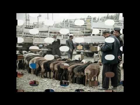 Sunday Livestock Market - livestock market news