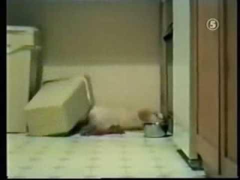 Śmieszny filmik - śmiechu warte 2: śmieszne zwierzęta