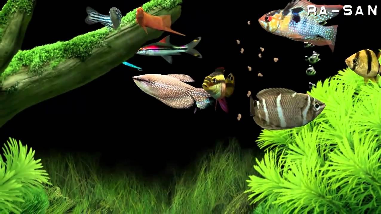 Aquarium youtube atlanta aquarium youtube 2017 fish for Dream of fish tank