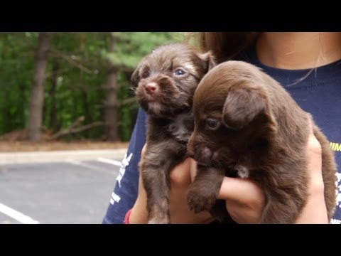 Rescued Arkansas Dogs Start New Lives