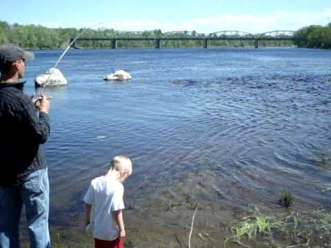 Smallmouth bass fishing penobscot river maine youtube for Maine out of state fishing license