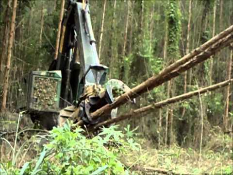 Vito Transportes Manutenção de Maquinas Florestais