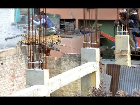 CCTV captures leopard moving in market