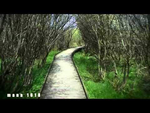 Impression of Ardennes Belgium - Far Away - Martha Wainwright