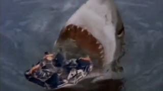 Megalodon Shark Caught On Tape