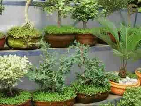 Mercado de plantas de xochimilco plants market youtube - Imagenes de plantas de interior ...