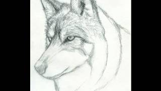 How To Draw A Realistic Wolf (Step By Step)