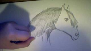 Tutorial: Come Disegnare Un Cavallo Parte 2/Draw A Horse 2