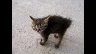 Gatito muy enojado