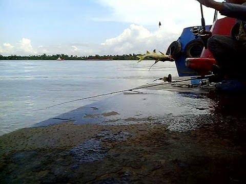 Mancing udang ternyata dapat ikan Mayong - Lokasi Sungai Kutai Lama