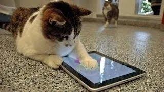 Los gatos también utilizan la tecnología ¡Qué habilidades!