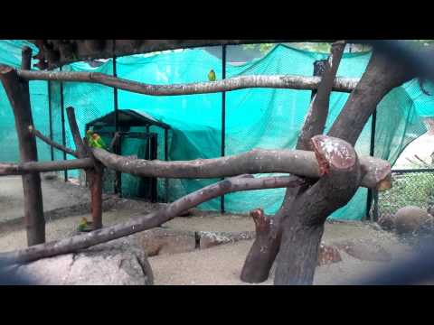 Parrots at Nehru Zoological Park, Hyderabad