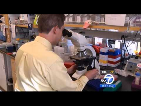 ABC 7 News Video Clipping - Cancer & Obesity (7-9-2013)
