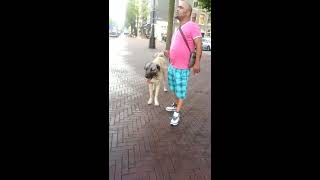Kangal Vs Pitbull Amsterdam Oost 2013