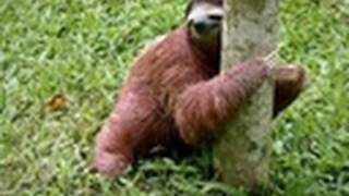 Baby Sloths Get Potty Trained