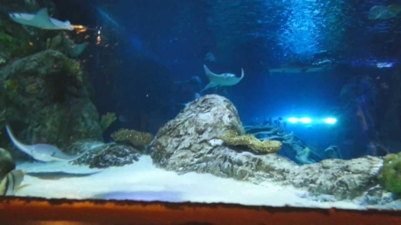 Sea Life Grapevine Mills Aquarium Paseo Familiar Phc