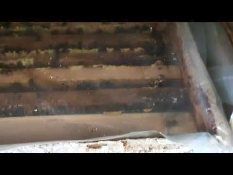 2/2 Apicultura pentru incepatori O metoda simpla si eficienta de tratament cu varachet al albinelor