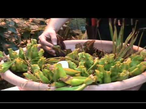 British Columbia Magazine explores B.C.'s carnivorous plants