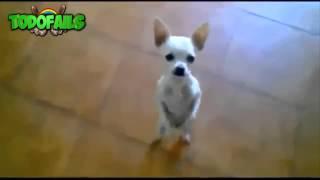 Vídeos graciosos con animales