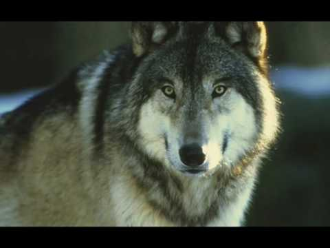 The Wolves - YouTube