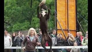 Pitbullshow 2011.mpg