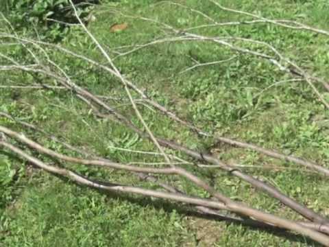 - Deco avec des branches d arbres ...