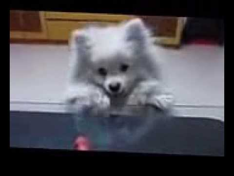 video unik anak anjing ~!