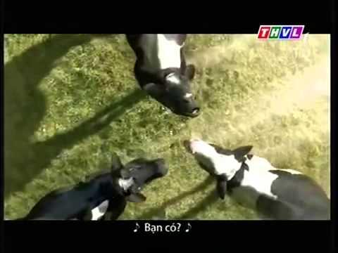 Quảng cáo vinamilk những con bò hát