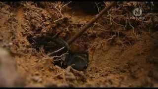 Tarantula - Pavúk všetkých pavúkov