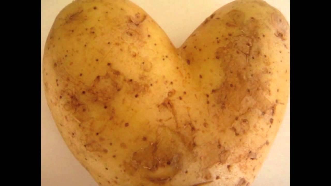 Sexy potato - Y...