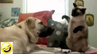Videos De Risa   Animales   Perros Y Gatos Chistosos