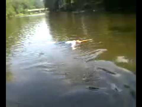 la sirena del rio,