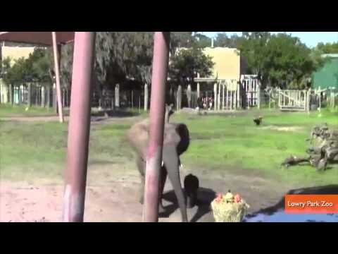 Elephant Chooses Baby's Name By Eating Food
