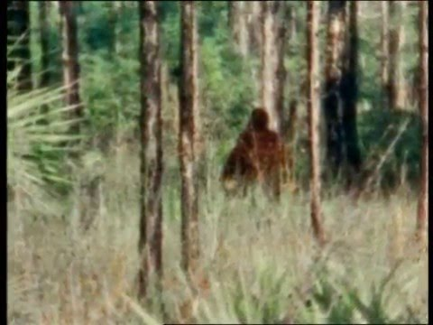 Skunk Ape, Animal Emotions, Fish and Frog Falls