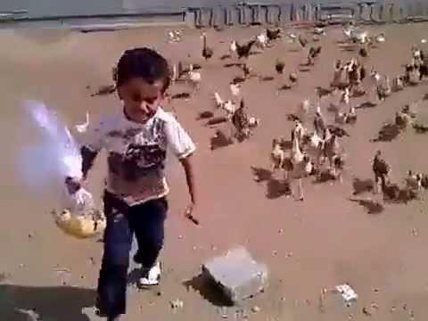 Cậu bé bị đàn gà truy sát thấy thương quá đi