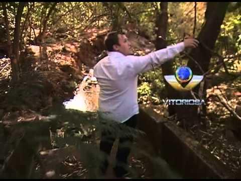 Árvores derrubadas e pneus jogados degradam ambiente no Aclimação