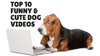 Os dez vídeos mais engraçados com filhotes