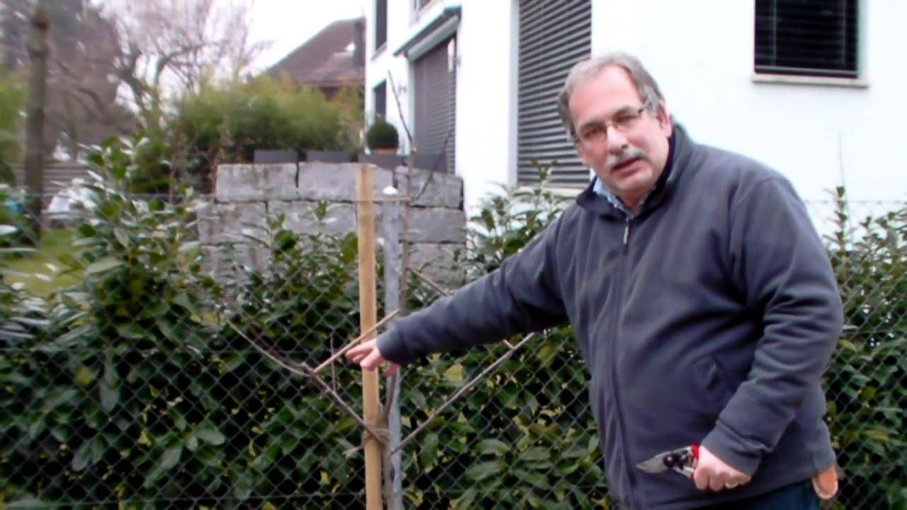 schneiden im garten 2011 herr inderkum 4v10 schnitt eines zwetschgenbaums youtube. Black Bedroom Furniture Sets. Home Design Ideas