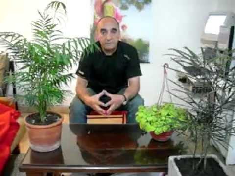 Plantas de interior para la salud el dinero y el amor - Plantas para atraer el dinero ...