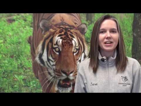 Zoo Tycoon Community Challenge
