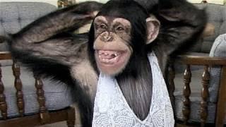 Chimpacé aprendiendo un baile sexy