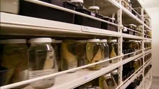 Deep-Sea Fishes in the Collection