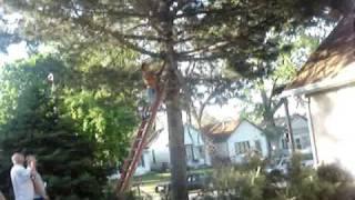 WARNING Cutting Down A Tree, Man Gets Hurt By Fallen Tree