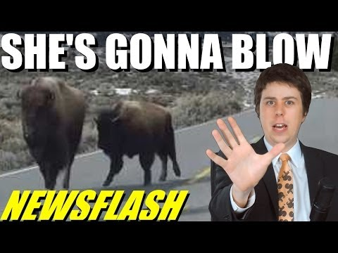 Bison Run From Yellowstone, Will it Blow?!! - NEWSFLASH