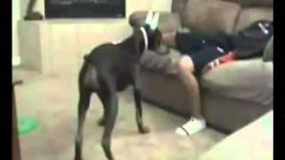 Broma con Puntero Laser al Perro