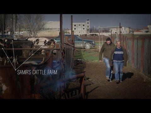 Lebanon: Samir's Cattle Business