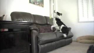 """How To"" Stop Your Dog From Jumping On The COUCH Without"